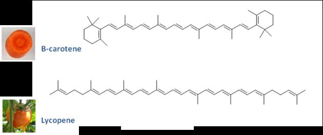 Les Carotenoides La Photosynthese