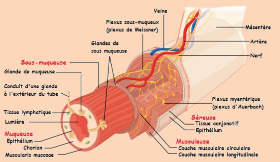 Le psoriasis et le lupus simultanément