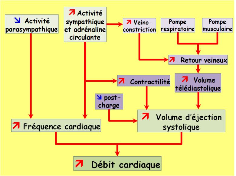 debit cardiaque calcul