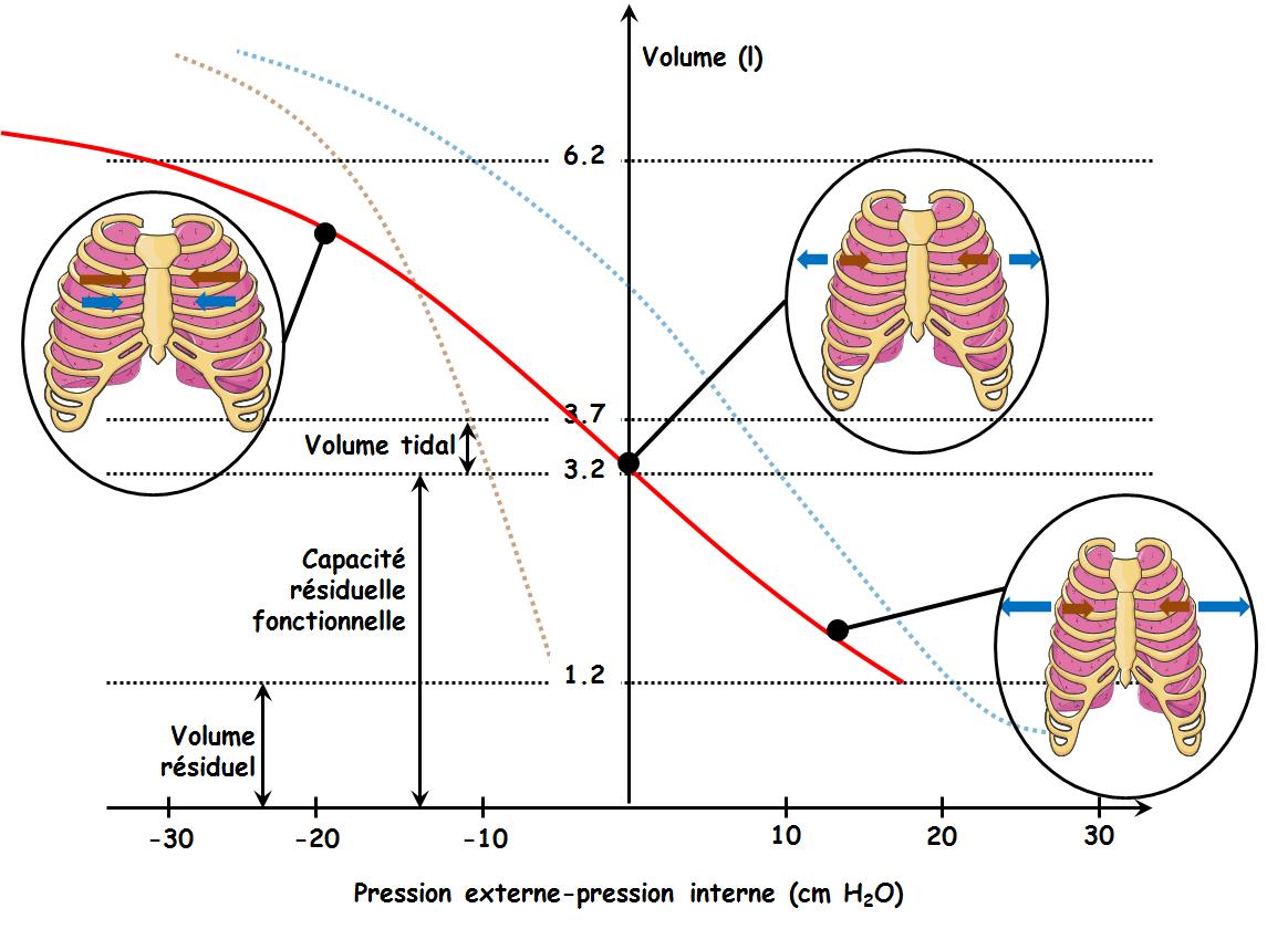 pression télédiastolique ventricule gauche