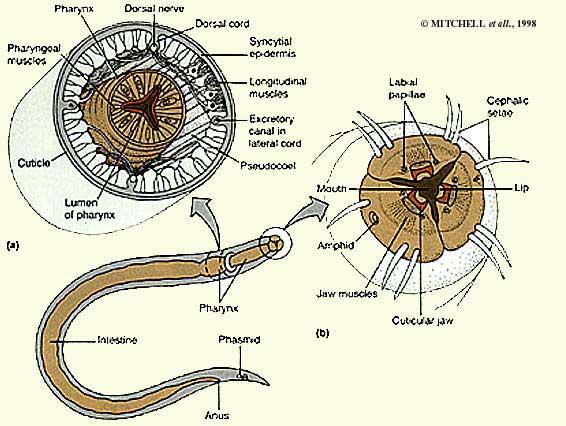 Comme sortent de lorganisme les parasites à laccueil intoxic